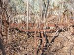 An old hay rake, well camouflaged